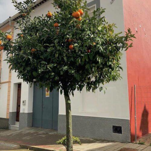 In einem Dorf in den Bergen mit Orangenbäumen in jeder Straße...
