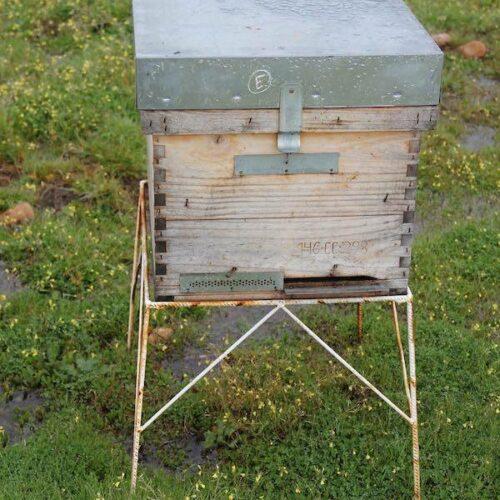 Selbstgemachtes Bienenwachs.