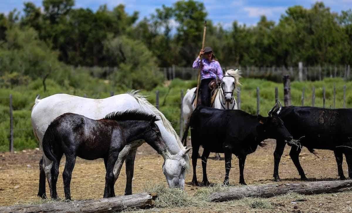 Working Equitation Herde