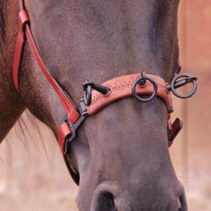Kappzaum in schlichtem Design aus braunem Leder mit schwarzen Beschlägen am Pferd