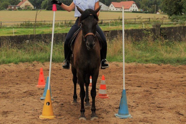 Working Equitation Reitunterricht für Kinder bei Picadera