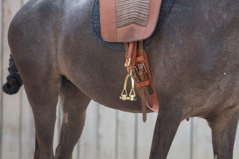 Kurzgurt Doma Extra am Pferd bei Picadera
