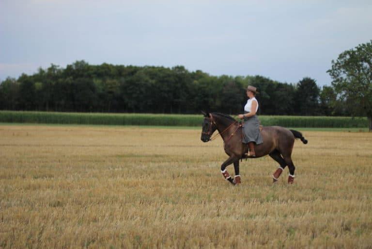 Spanisches Pferd mit Reiterin in der Natur bei Picadera
