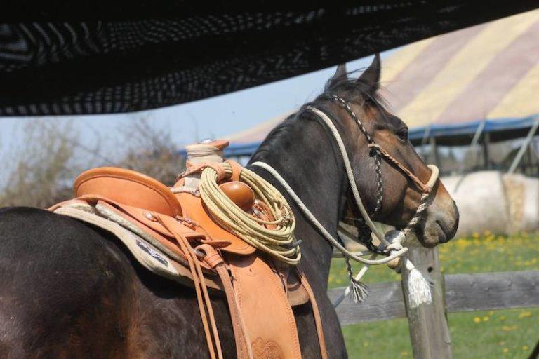 altkalifornische Pferdeausrüstung